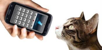 Переводчик с кошачьего youtube.